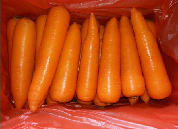 Spring Carrot Product Carrot Factory Price