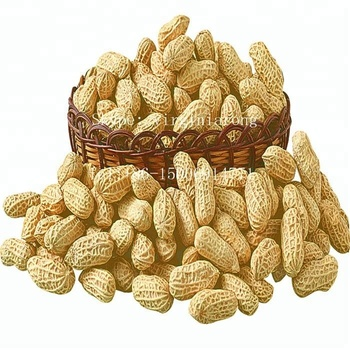 Export raw peanut in shell for peanut importer in Singapore