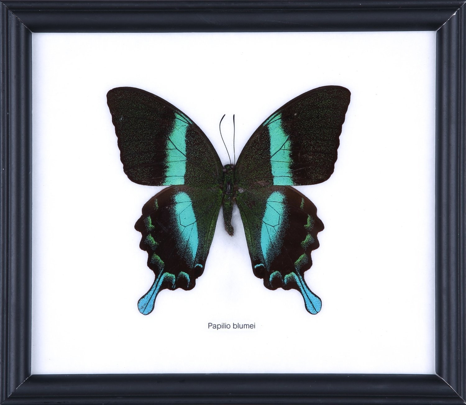 Cheap Butterfly Display Frame, find Butterfly Display Frame deals on ...
