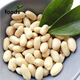 High Quality 100% Raw Blanched Peanut Kernel Supplier