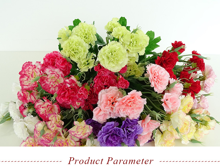 Beautiful Silk Carnations Dried Carnations Artificial Carnation ...