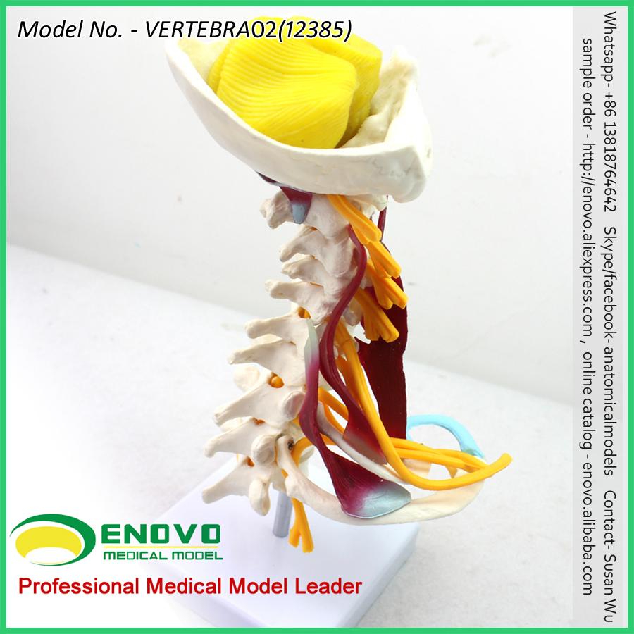 Venta al por mayor anatomia de la columna-Compre online los mejores ...