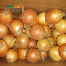 Professional china origin red onion exporters from pune