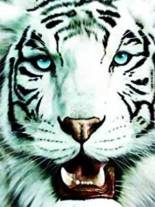 The 3D Art Company-White Tiger- Unbelievable Life Like 3D Art Pictures, Lenticular Posters, Cool Art Deco, Unique Wall Art Decor, With Dozens to Choose From! Not Any Thing like you have seen before!