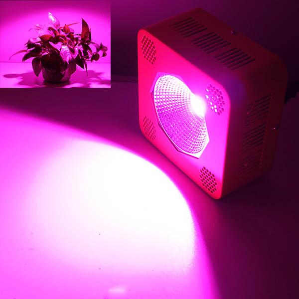 Hydroponic Cob Grow Light 200 Watt Epiled Cob Chip Led Grow Indoor ...