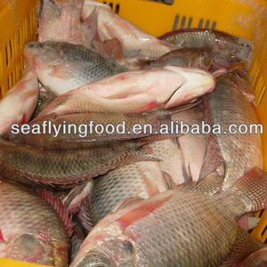 Fresh High Quality Whole Round Frozen Blue Tilapia Fish