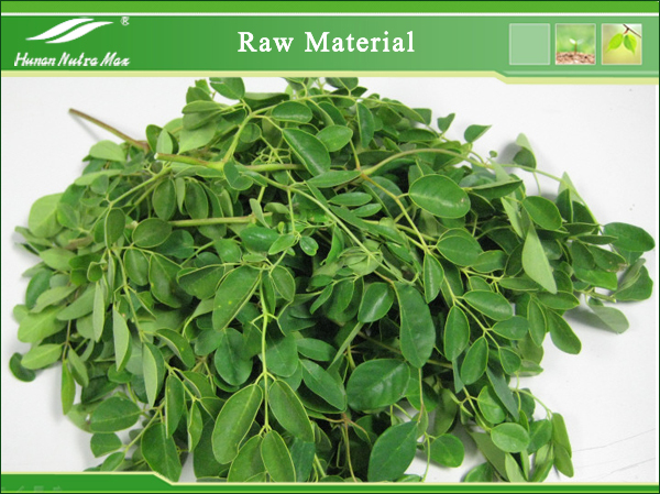 Moringa Tree Leaf Powder Health Benefits/moringa Leaf P.e.