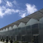 High Efficient Venlo Tempered Glass Greenhouse