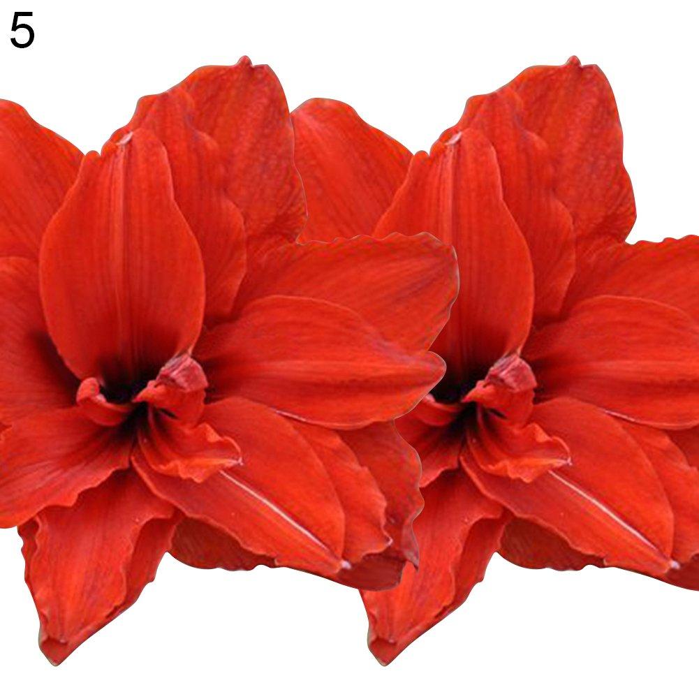 Cheap Flower Bulbs Amaryllis Find Flower Bulbs Amaryllis Deals On