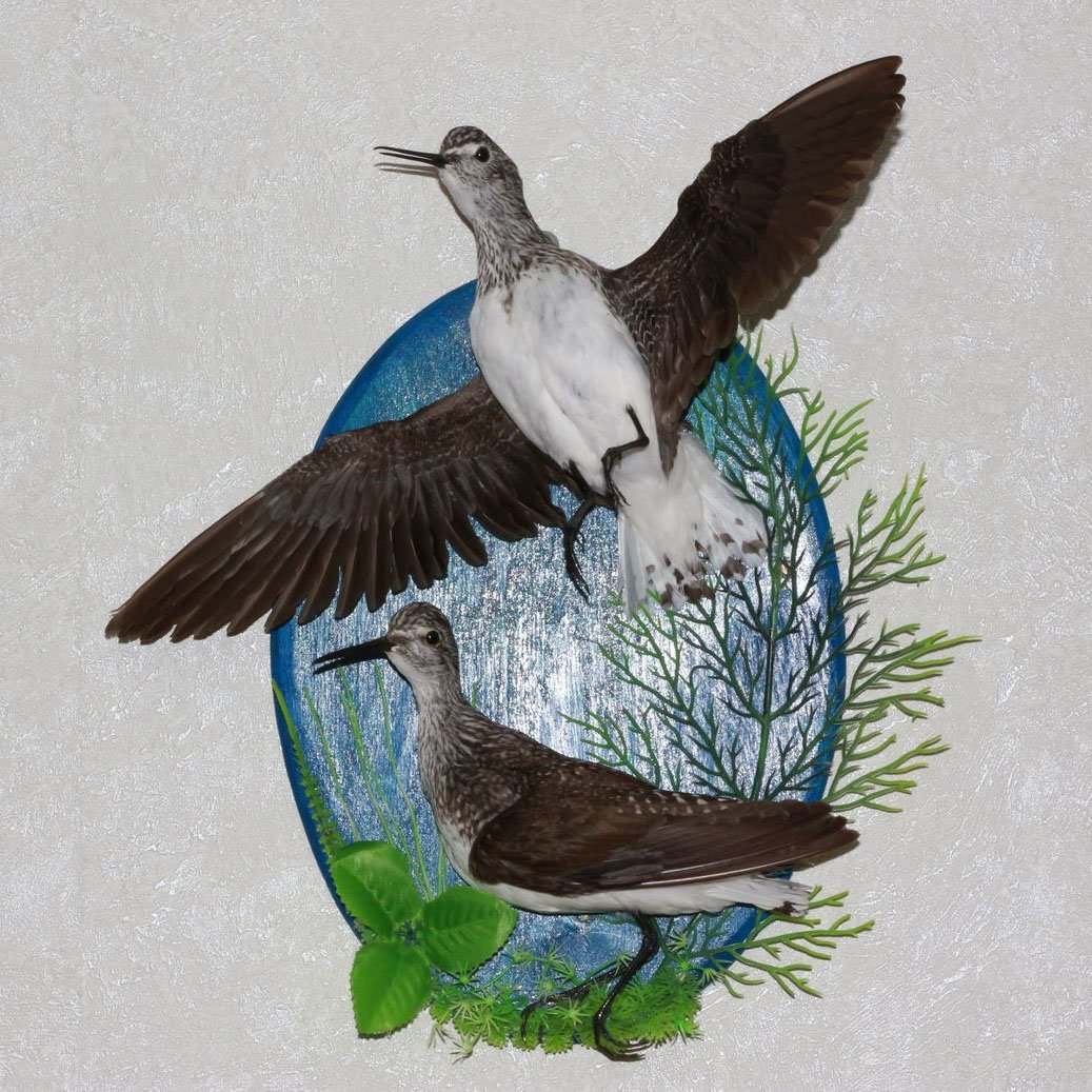 Birds For Sale >> Buy Pair Of Birds Taxidermy Bird Mount Stuffed Bird For Sale In