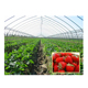 China supply for sale agriculture strawberry greenhouse film