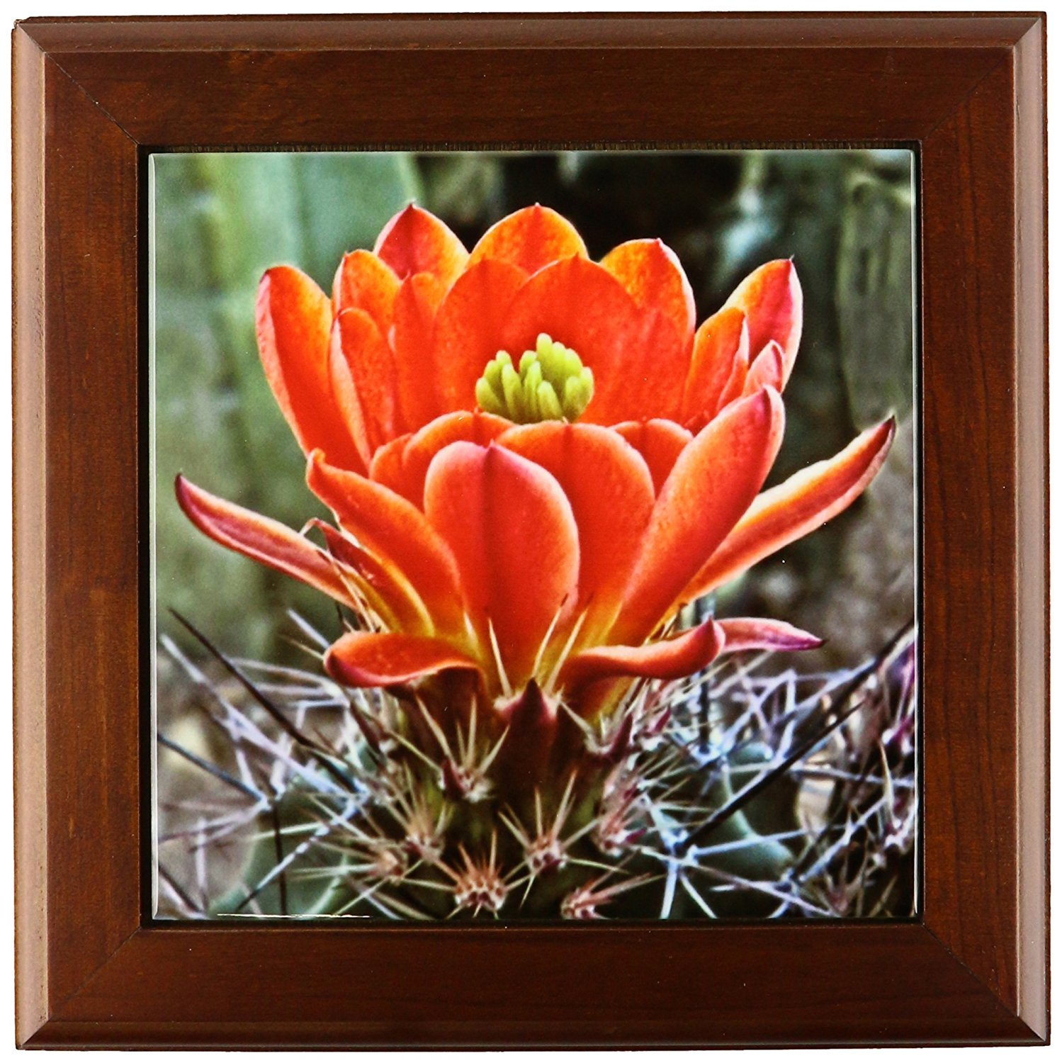 Cheap Cactus Red Flower, find Cactus Red Flower deals on line at ...