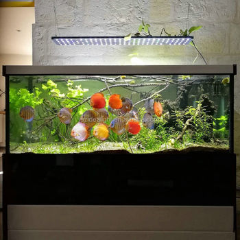 https://sc01.alicdn.com/kf/HTB1is_iRpXXXXccaXXXq6xXFXXXI/60-inch-led-aquarium-light-with-aquarium.jpg_350x350.jpg