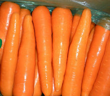 New season fresh australian carrots for Bangladesh