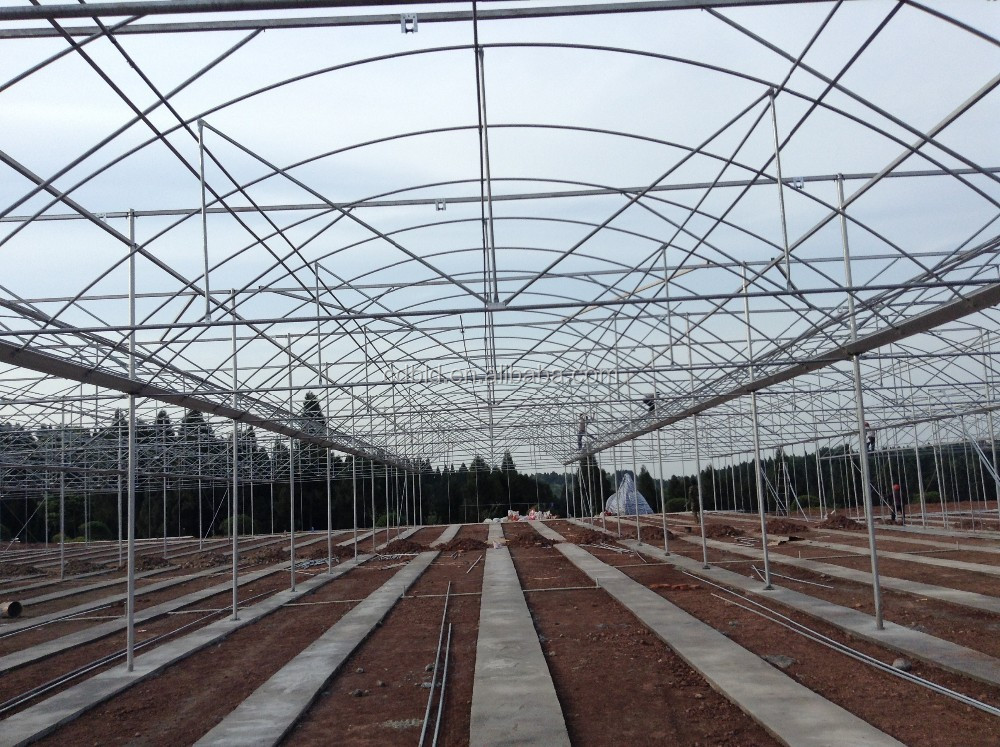 how to buy a greenhouse