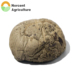 Lowest Price Green Champignon Dried Shiitake Mushroom Exported to Korea