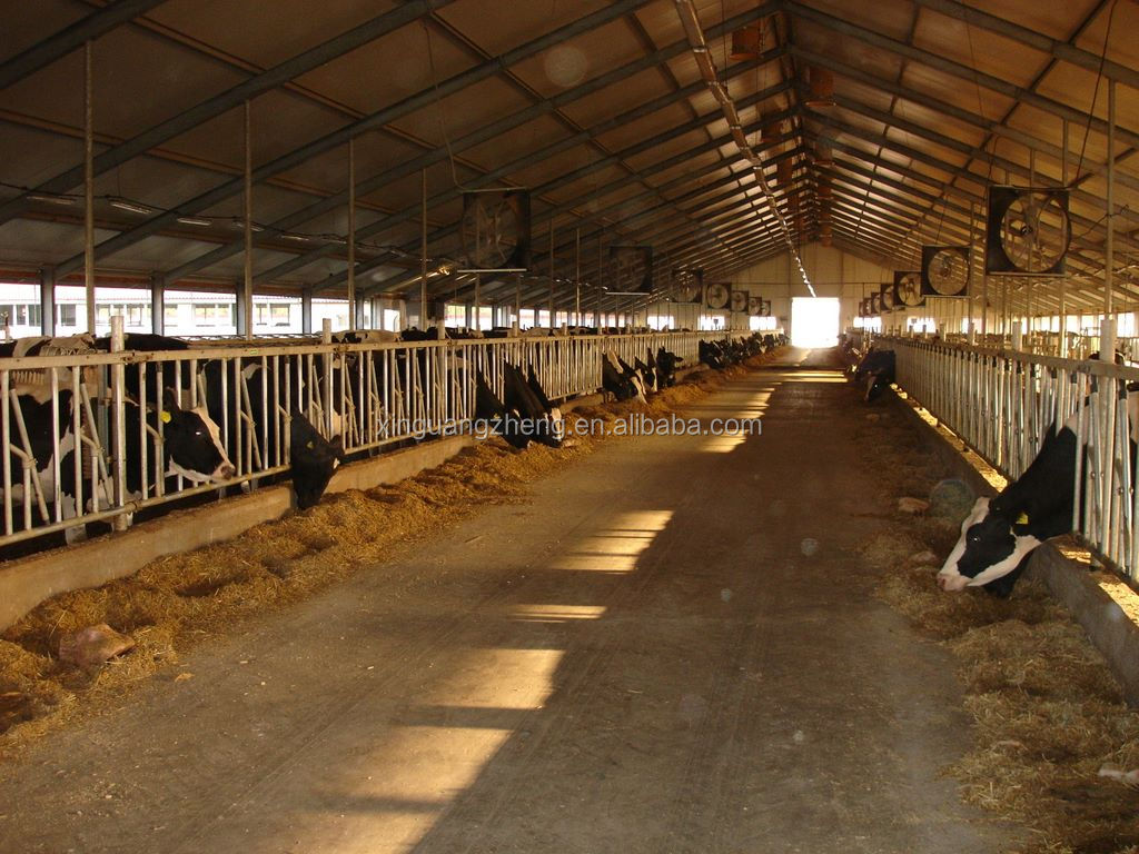 Safe without infection Use and Steel Material prefabricated cowshed building