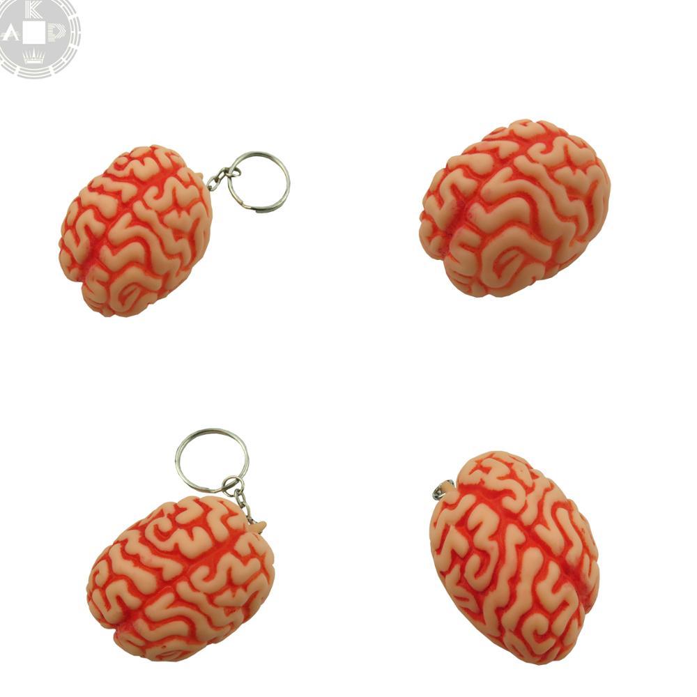 Anatomie Menschlichen Medizinische Brain Modell Diagramm Für Lernen ...