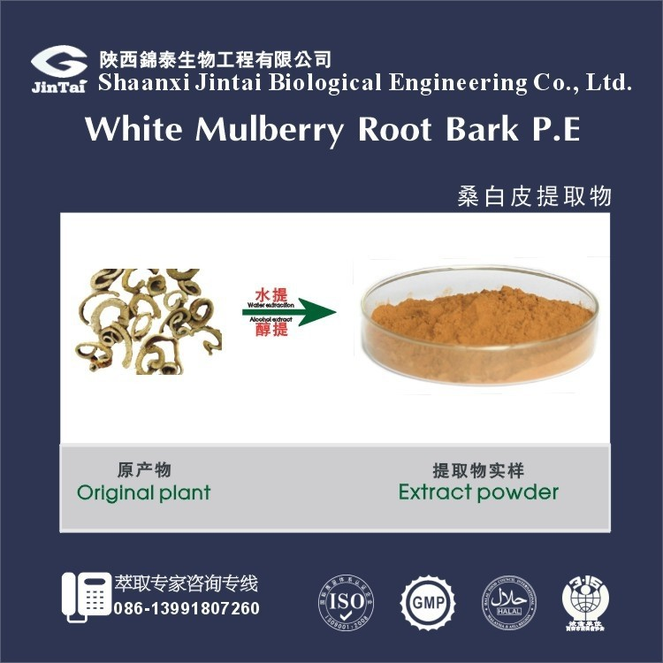 High quality Factory supply the root bark of white mulberry