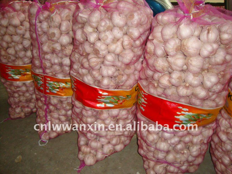 cangshan garlic to indonesia market