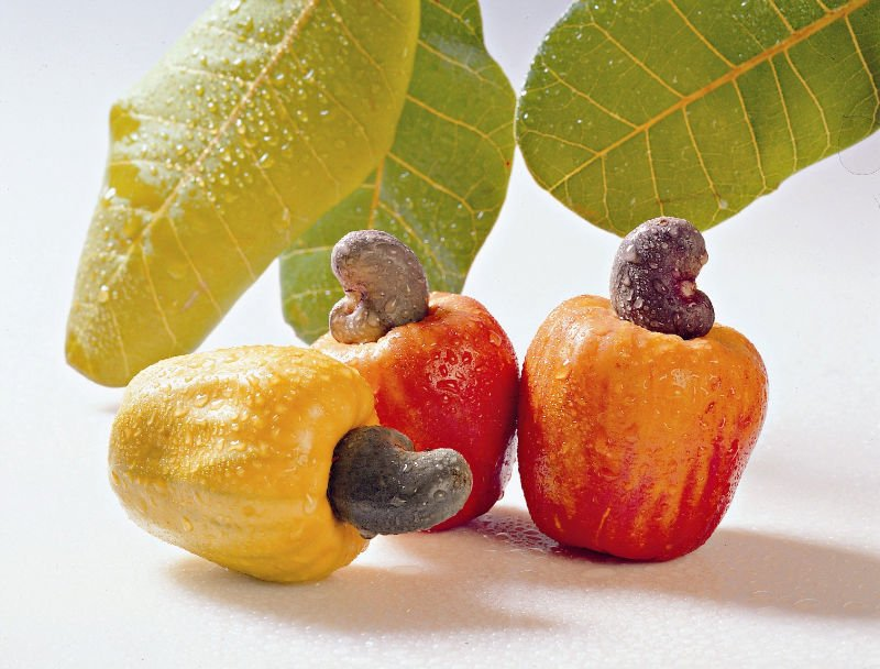 Cashew Juice, Cashew Juice Suppliers and Manufacturers at Alibaba.com
