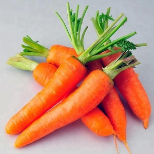High quality China fresh carrot price