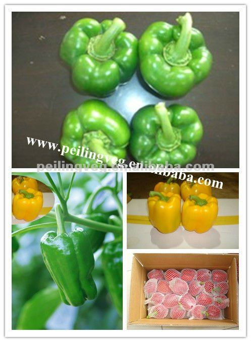 9bcdc0f78f9e Fresh Red Bell Pepper High Quality
