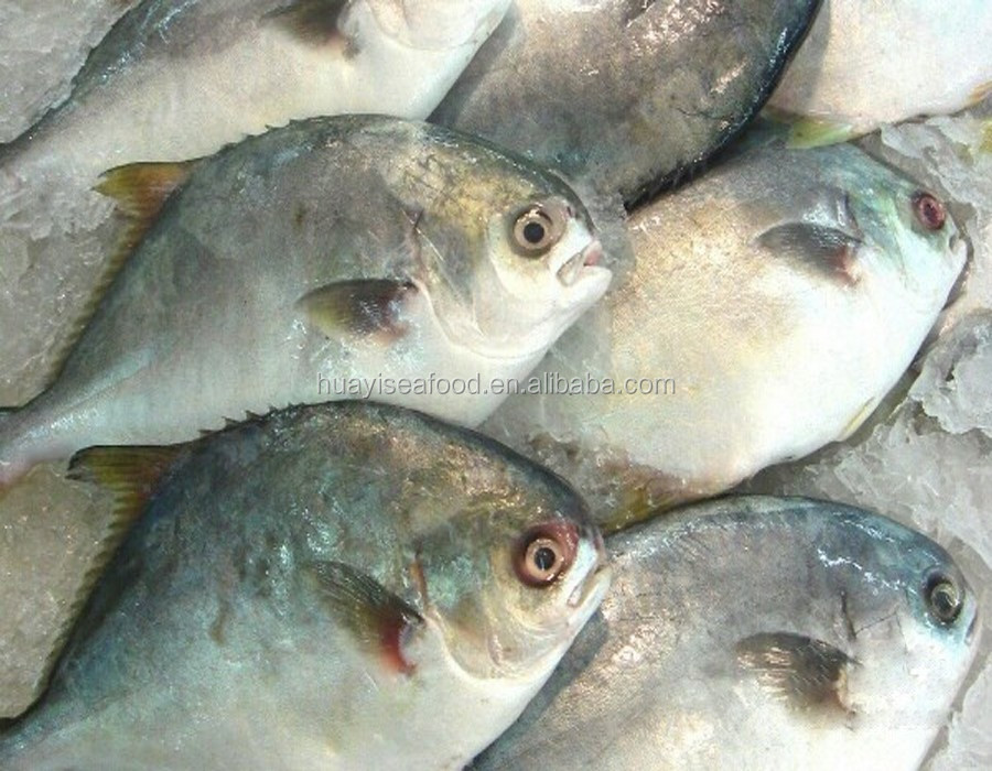 sell whole round frozen pompano fish with competitive price