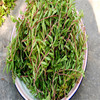 Ma chi xian Chinese factory supply herba portulacae seeds / purslane herb seeds