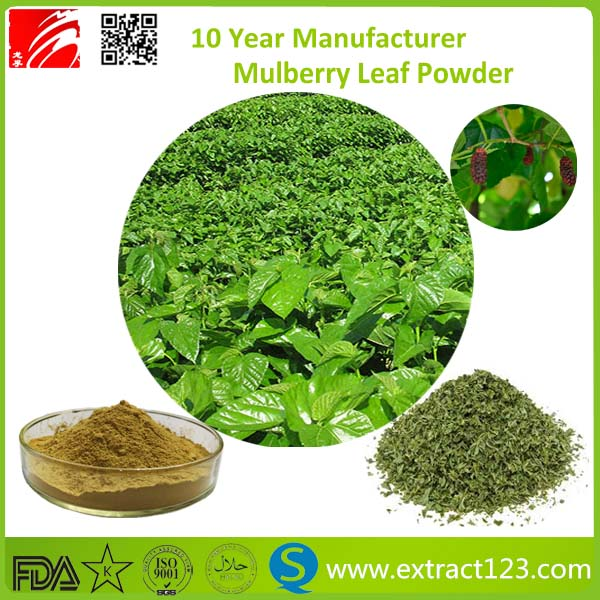 free sample mulberry leaf extract powder