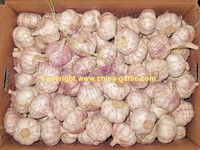 Bulk pickled garlic for sale