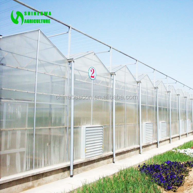 Greenhouse for Professional Growers and Cost Effective Vegetable Production
