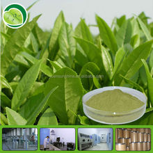 cosmetic grade material skin whitening green tea Extract P.E. Powder/Green Tea Polyphenols Extract powder UV 10%-98%
