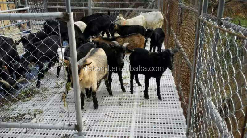 Plastic Goat Flooring Suppliers And Manufacturers At Alibaba