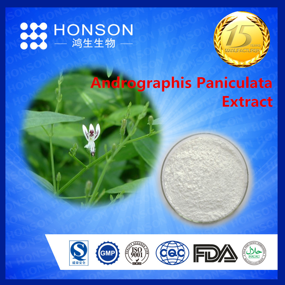 herbal natural antibiotic for medicine supplier andrographis paniculata extract andrographolide