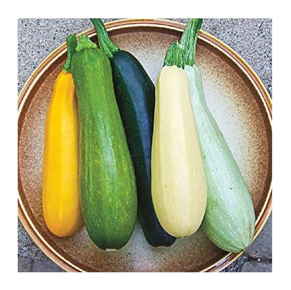 David's Garden Seeds Zucchini Summer Melody SL0111 (Multi) 50 Open Pollinated Seeds