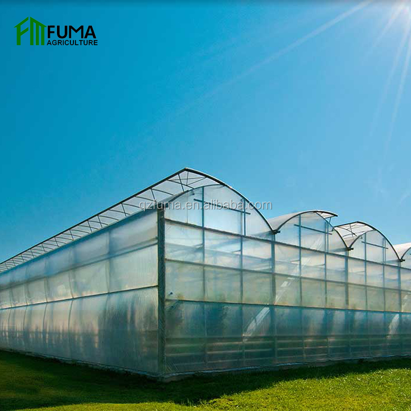 Agriculture low cost 10mm polycarbonate greenhouse with hydroponic growing system