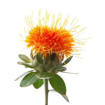 Natural Safflower Flower Yellow Color Carthamus Tinctorius L Extract Buy Carthamus Tinctorius L Extract Yellow Flower Food Addictive Safflower Extract Product On Alibaba Com