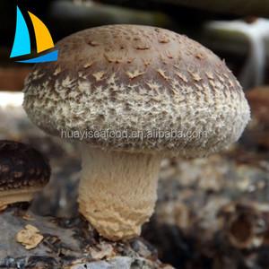 7311564c2ec Sterilized Mushroom Bag Wholesale