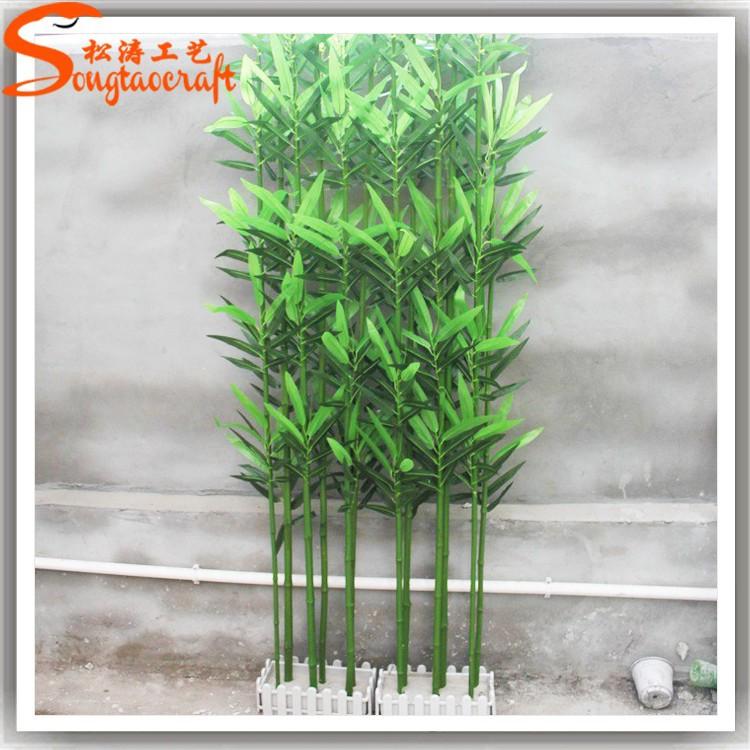Piante bambu vendita idea creativa della casa e dell for Cannette di bambu prezzo