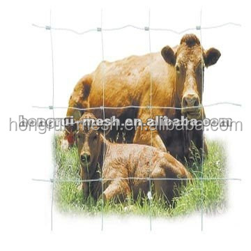 200 High cattle fence Hongrui Provide cheapest high quality wire mesh