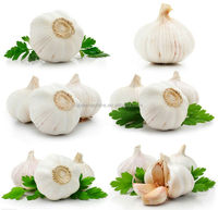2014 crop farmer wholesale garlic in China