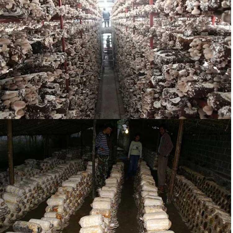 великие грибная ферма в подвале фото дивизия это добровольцы