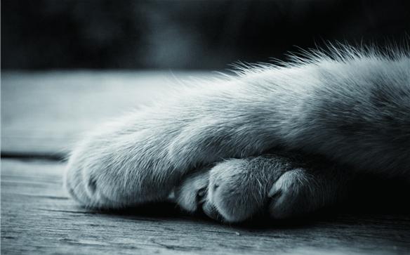 Free shipping 27x40cm warm Cat paws poster Custom Home Decor unframed Fashion Wall Sticker