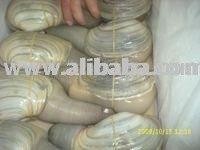 geoduck clam