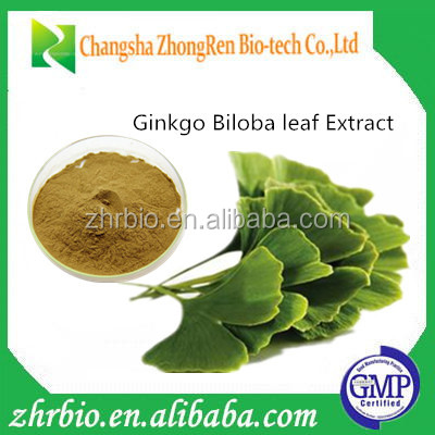 GMP factory Free samples/ginkgo biloba herbal extract/dried ginkgo biloba leaves Extract