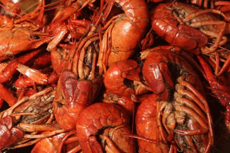 Whole cooked cajun crayfish buy cray fish product on alibaba ccuart Images