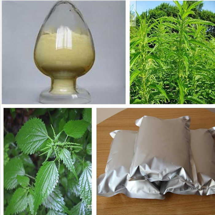 Nettle P.E. powder extract natural supplyment for hot sale
