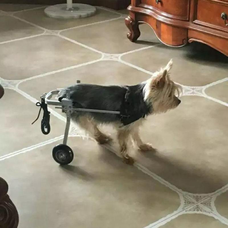 m tal fait chien en fauteuil roulant pour handicap chien. Black Bedroom Furniture Sets. Home Design Ideas