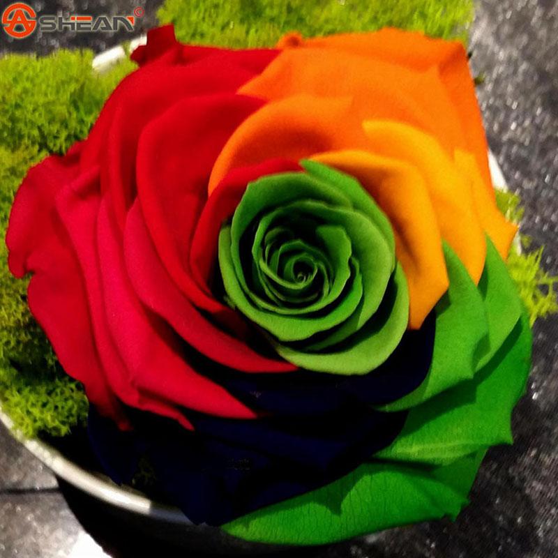 online kaufen gro handel regenbogen rose samen aus china regenbogen rose samen gro h ndler. Black Bedroom Furniture Sets. Home Design Ideas